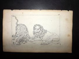 Sayer Compleat Drawing-Book 1757 Antique Print Study of Lion, Cheetah Panther 94